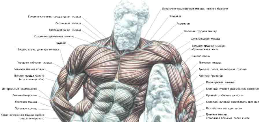 Расчет массы индекса тела по какому